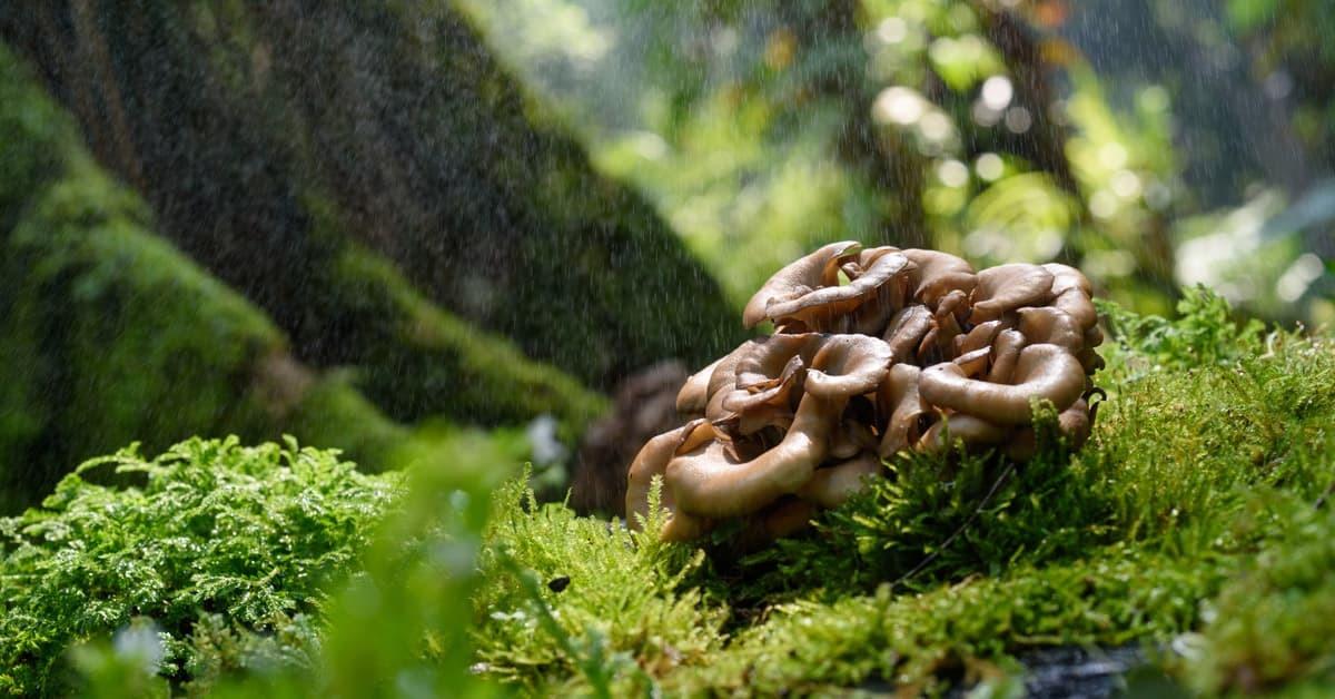 3 Funghi speciali